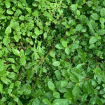 img-casa-viva-hojas